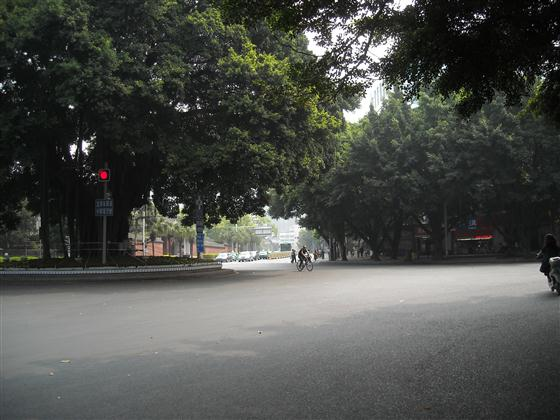 华林路上的绿荫-省政府前