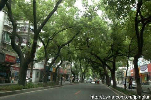 仙塔街上的绿荫